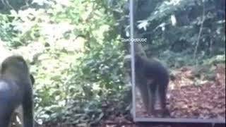 Funny videos of kenya(28)