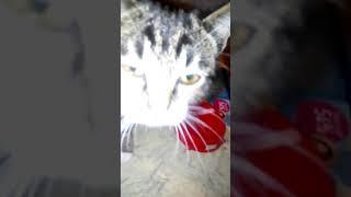 Котёнок не пьёт воду из тарелки, а моет там лапки