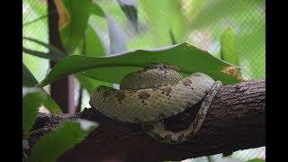 Leben im Dschungel mit giftigen Schlangen || 🇨🇷 Costa Rica #VLOG11 || Weltreise mit Baby 👧🏼