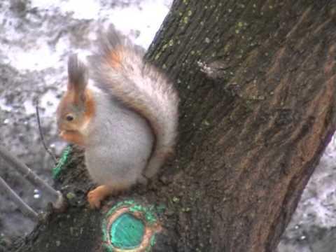 Squirrel on spring Белка и весна
