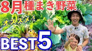 自然農初心者にオススメ!8月に植える野菜5選!