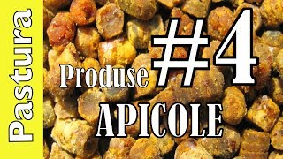 PASTURA DE ALBINE - PRODUSE APICOLE BEE VLOG #4