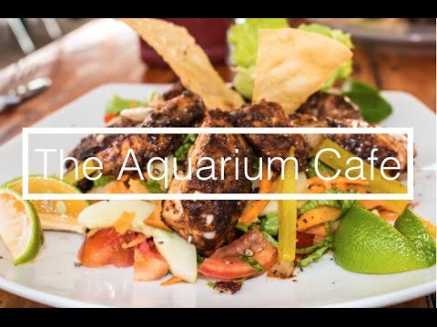 The Aquarium Cafe // Vava'u, Tonga