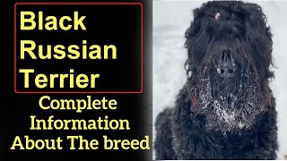 Black Russian Terrier. Pros and Cons, Price, How to choose, Facts, Care, History