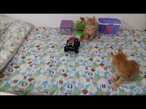Amazing Cats Video Compilation - Cute Kitty Stupefied by RC Toy_Funny Wacky Moments-P2 🐩