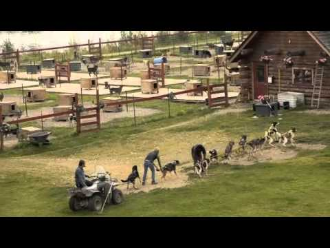 Chena (Athabaskan) Village - Training Alaskan Huskies for Iditarod