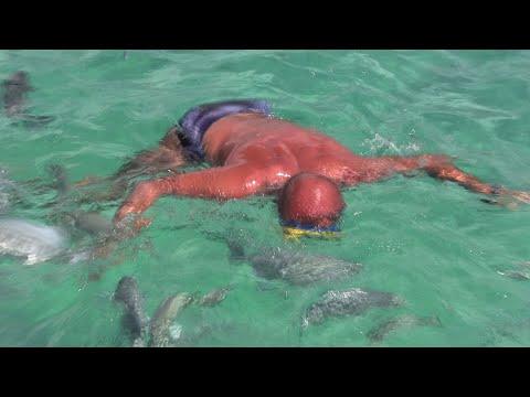 Piranhas attacked a man - пираньи атакуют человека =)