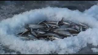 Магадан,рыбалка!(Если тебе понравилось видео - сделай доброе дело, репости во все доступные тебе соц сети! Премного благодарн..., 2017-02-01T17:37:50.000Z)