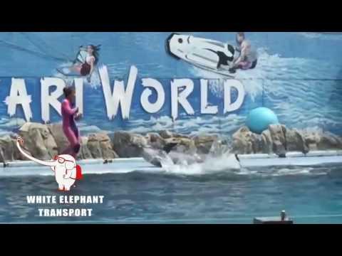 Safari World & Marine Park Tour - WHITE ELEPHANT TOUR & TRANSPORT