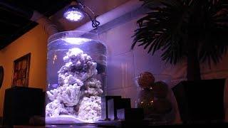 Biube Nano Reef Tank Build - Part 3