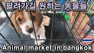 [Eng] 태국 짜뚜짝시장에서 모든 애완생물들을 만나보자. Chatuchak animal Market, bangkok