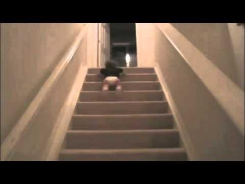 Louis Tomlinson se cae de las escaleras, con el concho en brazos
