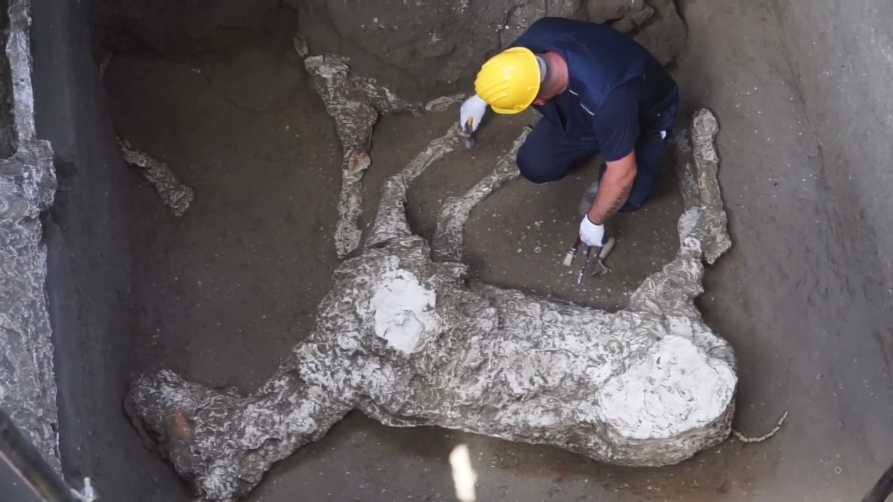 Unbelievable 2,000 year old horse remains unearthed in Pompeii