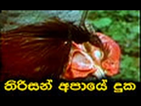 Aaye Din Bahar Ke (1966) - IMDb