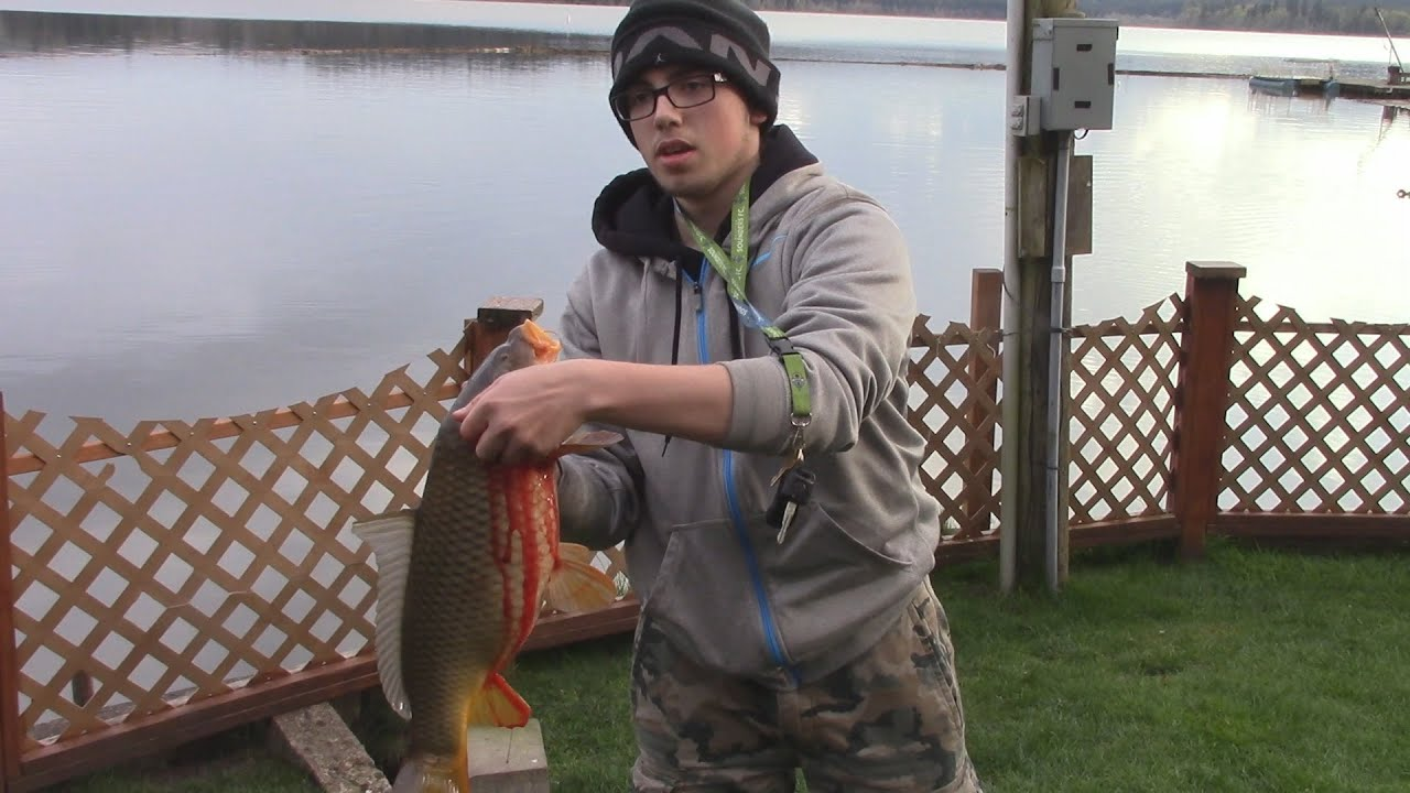 Fishing crappie bluegill catfish trout and carp for Wash state fishing reports