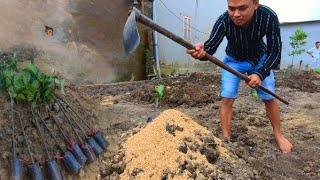 Cách Trồng Cây Mít Như Thế Nào Để Cây Phát Triển Tốt Về Sau Này /  Nhà Nông Làm Vườn