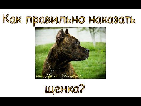 Как правильно наказывать щенка?