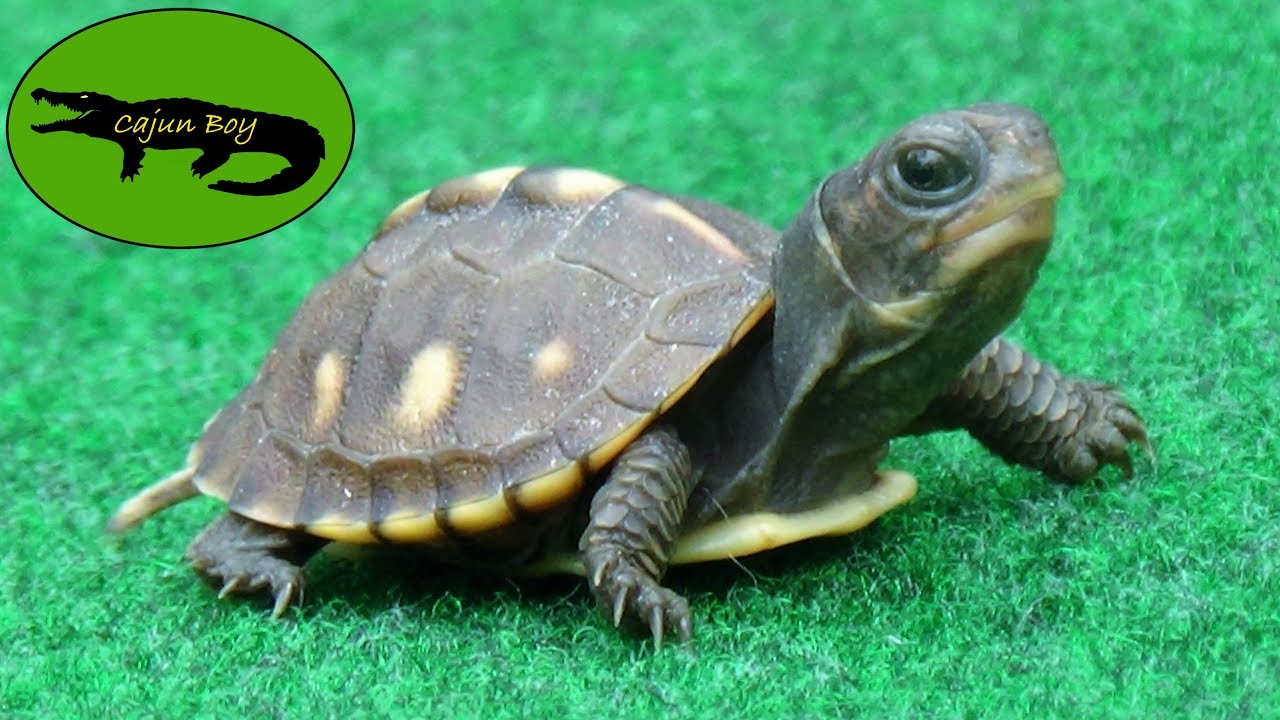 Cutest Baby Turtles Youtube
