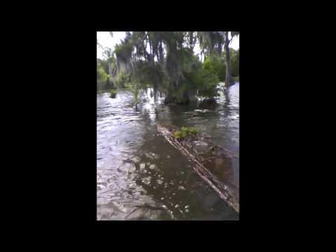 Day 1: Radio Radio en Louisiane dans l'Bayou
