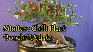 ChilliDave's Bonchi (Bonsai) July update