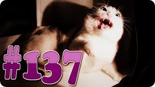 Приколы с животными №137   Злой кот не дает собаке корм  Смешные животные  Animal videos