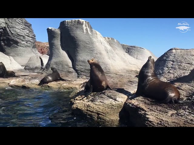 Sea lion colony in Loreto, Baja California Sur, Mexico.