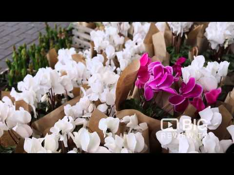 The Flower Parade Florist Shop In Norwood SA Offering Floral Design And Bouquet