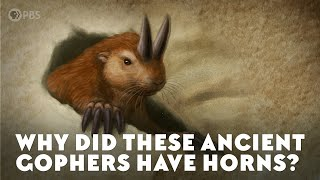 When Rodents Had Horns