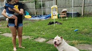 American Bullies and Babies lol we been watching our niece so it was time she met the bulls