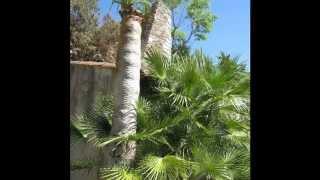 Hyères les Palmiers (Var)
