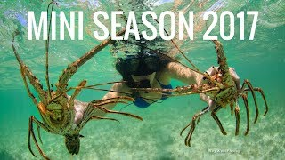 HOW TO Catch+Clean Lobster | Mini Season 2017