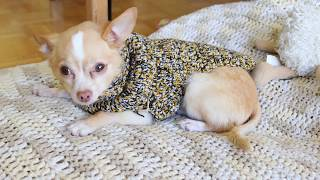 Crochet How to: easy Turtle Neck Dog Sweater / free crochet pattern | Last Minute Laura