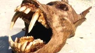10 Mysterious Creatures That Could Be Real