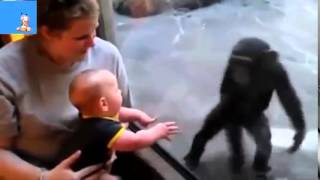 Funny Clips Hd Download Funny Text Message Jokes Short Videos Download Funny 3gp Video