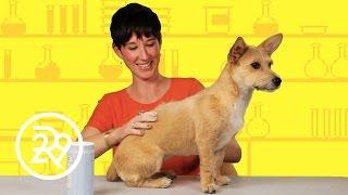 We Put Dry Dog Shampoo To The Test
