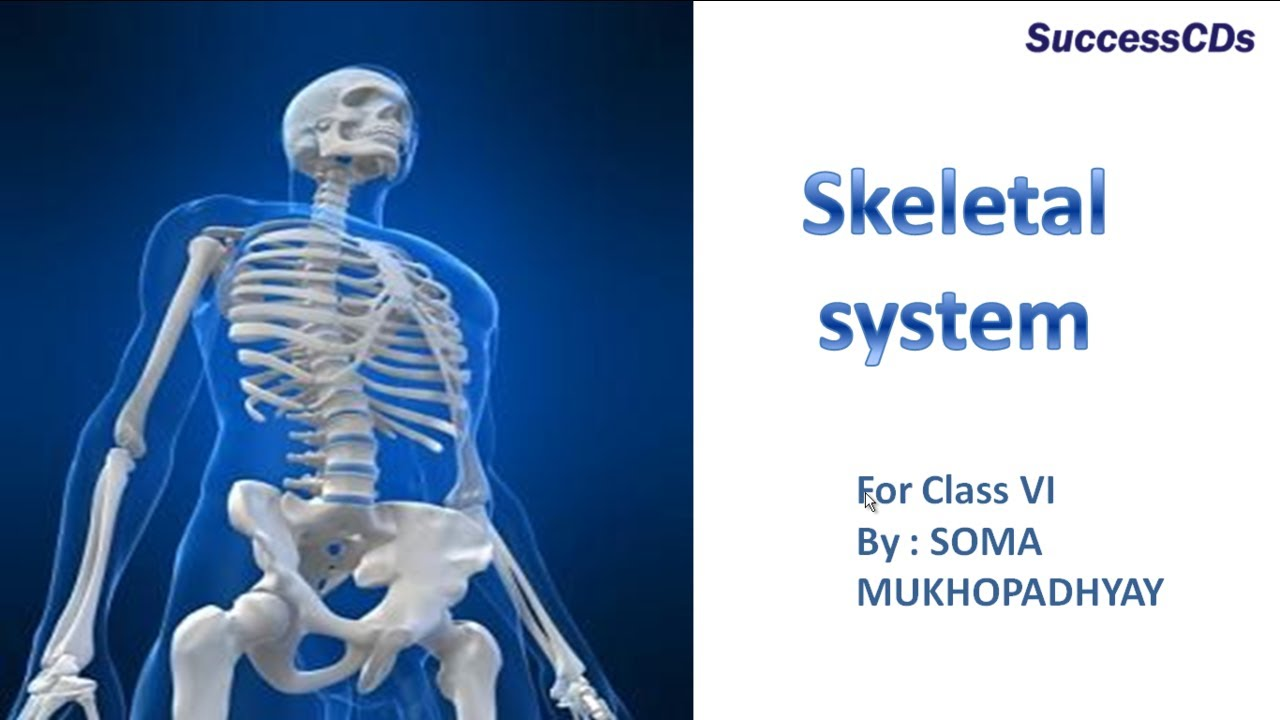 Skeletol system - Body Movement - CBSE Class 6 Science Class 6 Video