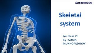 Skeletol system  CBSE Science Lesson Class 6th