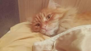 Люби котиков, эффектно моргнул!