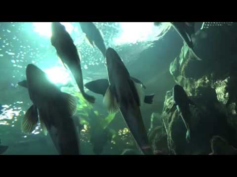 Sea Life with Ocean sounds