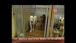 Приют для собак Екатеринбург