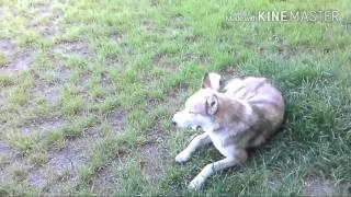 Собаки в Анапе!