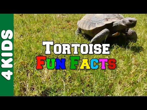 Tortoise Fun Facts | ANIMALS 4 Kids | JUNIORS TOONS