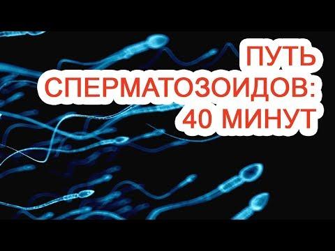 Путь сперматозоидов: 40 минут / Доктор Черепанов