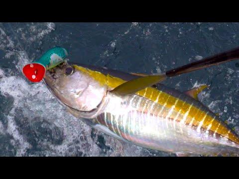 Yellowfin Tuna Catch & Cook - Offshore Kayak Fishing | #FieldTrips Panama