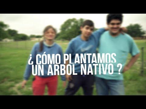 ¿Cómo se planta un árbol nativo en Córdoba?