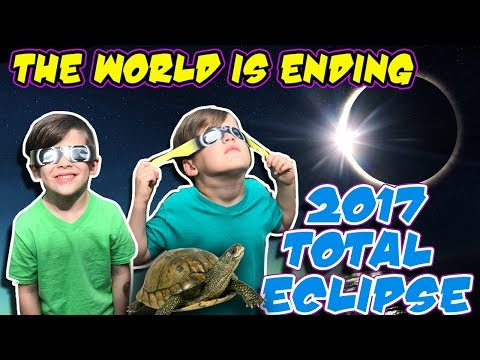 2017 Solar Eclipse | DAD's BLIND | We found a box turtle |  The world is ending