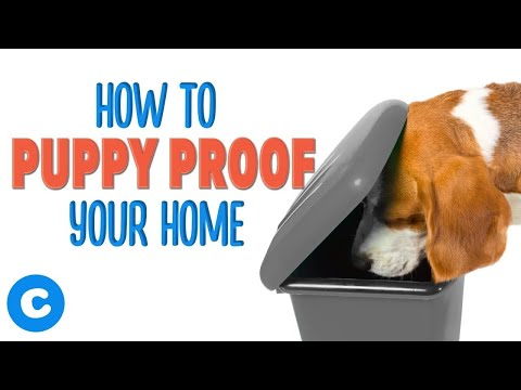 ways-to-puppy-proof-your-house