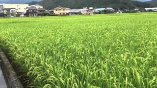あきたこまちの生育記録です。 田植えから稲刈りまで稲作の1年を動画に...