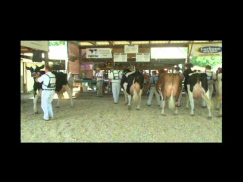 Part 2 of 2014 Central New York Holstein Show