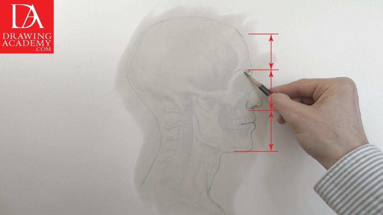 Anatomy in Art presented by Drawing Academy .com 13-3 - YouTube